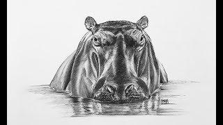 DRAWING the Hippopotamus