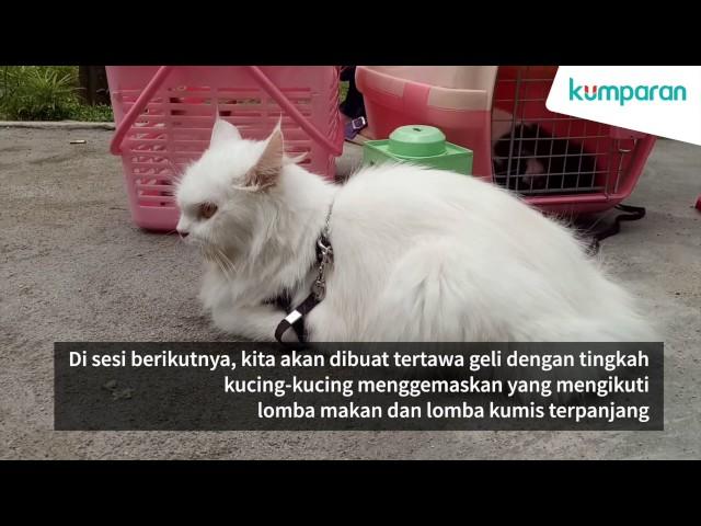 Download 93+  Gambar Kucing Kawin Lucu Paling Imut