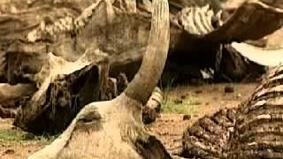 Arqueologia Biblica : Moisés, mito o realidad - Documental completo