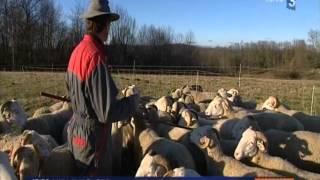 Reportage France 3 - Présentation du chien de conduite