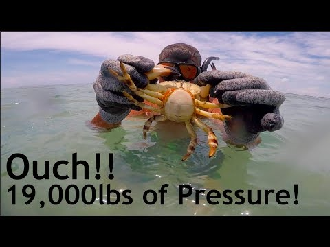 Do NOT Try This! Catching Stone Crabs by HAND!!