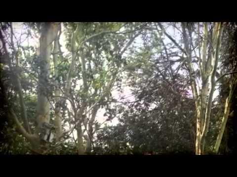 Vacant land for sale, Linden Ext, Johannesburg, RSA