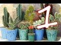 20 Tipos de cactus, que nunca habías visto !