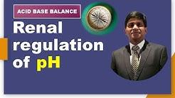 Renal regulation of pH  with animation: Acid base balance