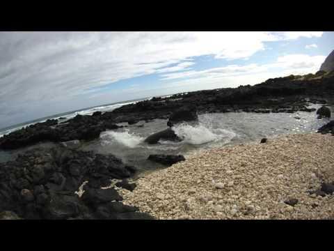 Hawaii Seal Fight!