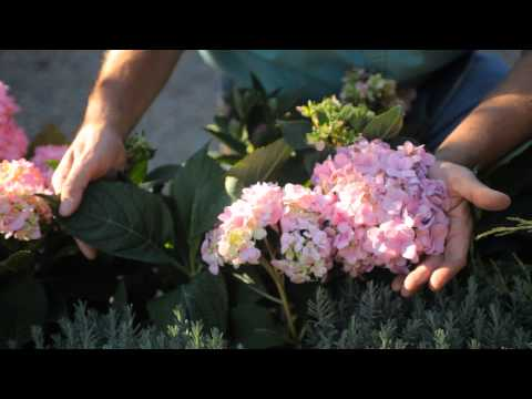 How to Landscape Shrubs & Trees : How to Care for Shrubs