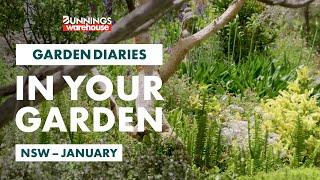 Gardening in January | New South Wales | Bunnings Garden Diary