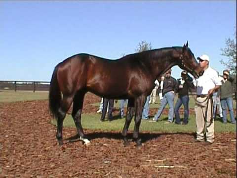 Congrats (by A.P. Indy) at Vinery Stud, FL 2009