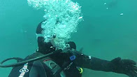 5bd1fbe25ba diving with sea lions - Duration  4 minutes