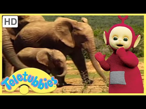 Teletubbies Full Episode   Baby Elephant   305