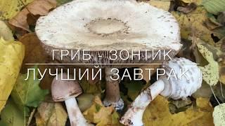 🍂🍄🍂Гриб - Зонтик / Лучший Завтрак