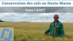 Colzas associés, couverts et semis direct en Haute-Marne, par Yann Cadet