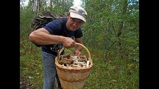 Просто сходил в воскресенье за грибами. Странная история с мухой.