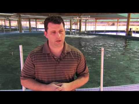 Commercial Corporate Sturgeon Aqua Farms