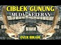 Heboh Ciblek Gunung Over Biahi Ciblek Gunung Keteran  Mp3 - Mp4 Download