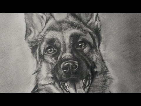 Drawing a dog german shepherd realistic drawing youtube