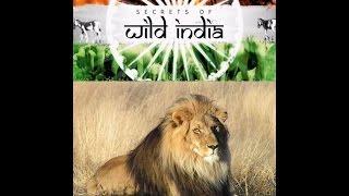 Львы пустыни  Тайны дикой природы Индии (Фильм второй)
