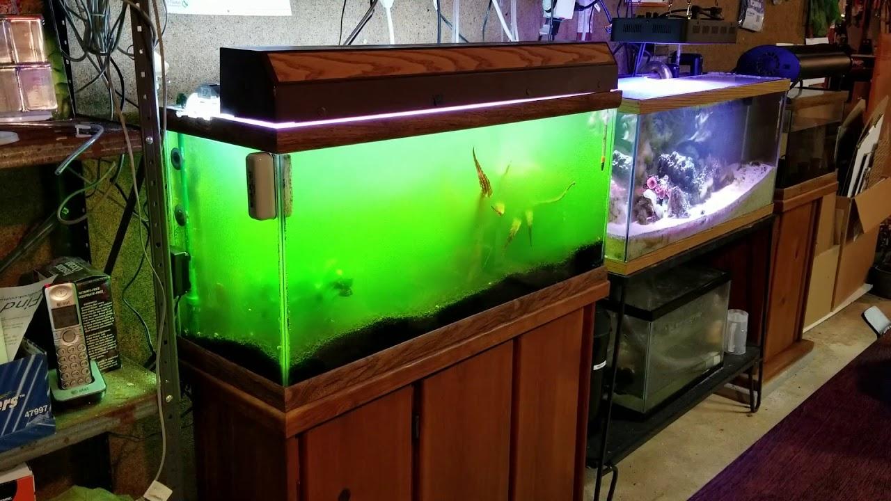 9W MQUPIN Submersible UV Light UV Sterilizer Light for Aquarium Fish Tank 5W-13W Water Cleanr US Plug/