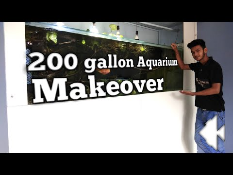200 gallon Aquarium makeover is done