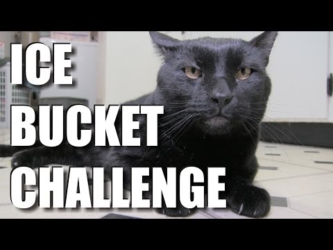 Sylvester's Ice Bucket Challenge