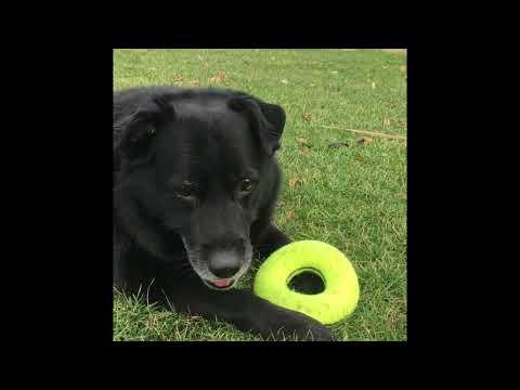 Kong - Airdog Squeaker Donut (Ultra-Durable)