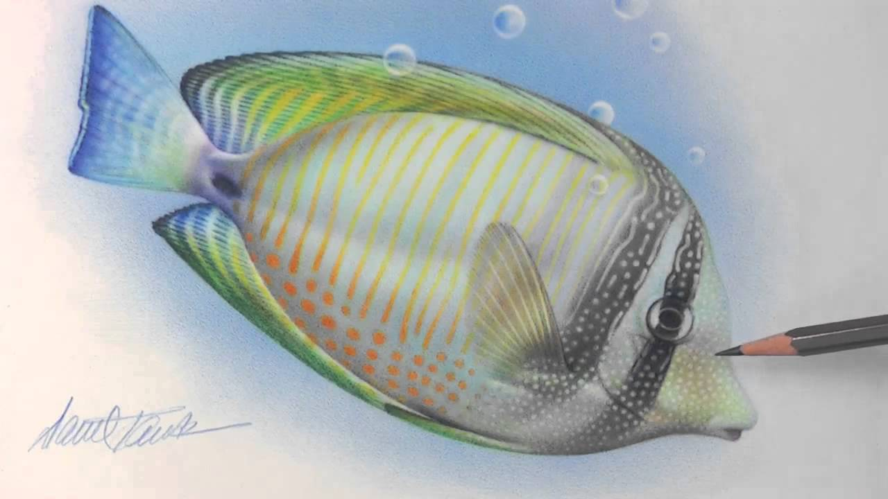 Pencil Fishes : ... : Intro to Drawing With Colored Pencils (Behind-the-Scenes) - YouTube