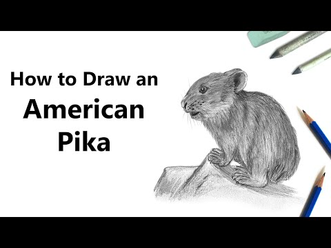 How to Draw an American pika with Pencils [Time Lapse]