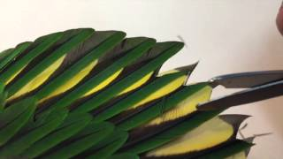 Correct way to trim parrot wing