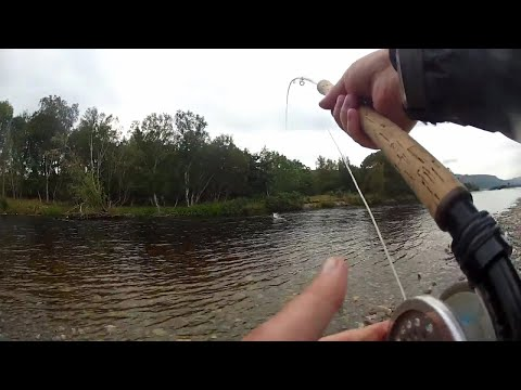 Salmon Fishing River Carron  2019