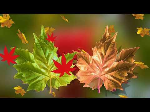Ich wünsche dir einen schönen Herbstanfang
