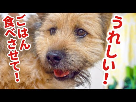 飼い主の手からしかごはんを食べてくれない子犬が可愛くてたまらない