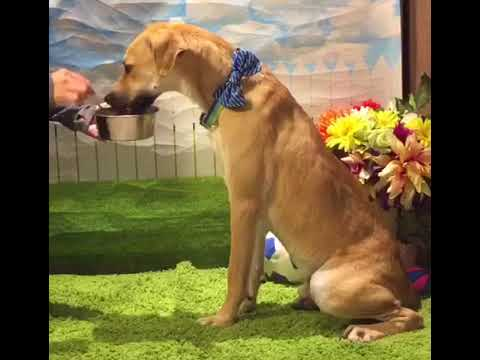 Adopt Mary's Doggies - Cargo no food aggression
