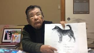 第15回『日本犬に就いて金指光春が語る』<日本犬の頸部・耳・口吻・...