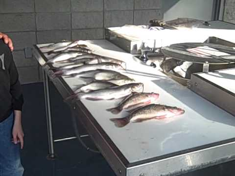 Paradise public fishing area berrien county ga youtube for Public fishing areas
