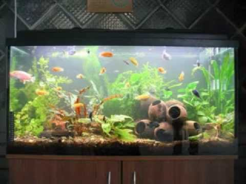 Easy DIY fish tank decorations - YouTube