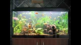 Easy Diy Fish Tank Decorations