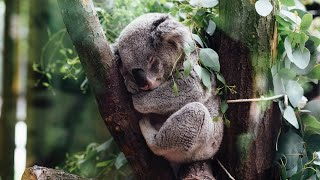 ¿Cómo duermen los animales?