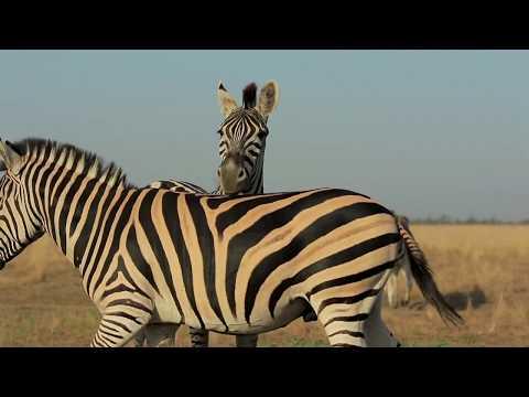 Africa Stories | Zebra Prints