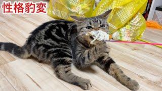 ネズミのおもちゃをあげた瞬間性格が豹変してブチギレてしまった猫w