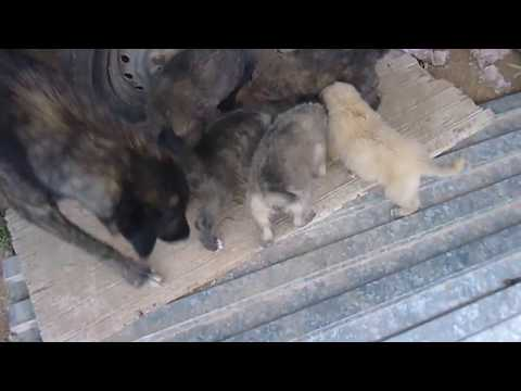 Feeding homeless dog with puppies