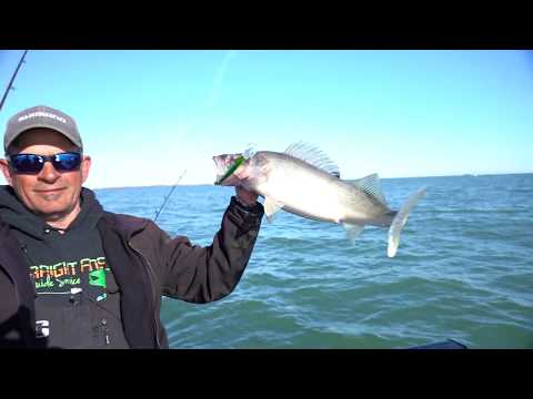 Lake Erie Walleyes - Hot Bite Fishing Report