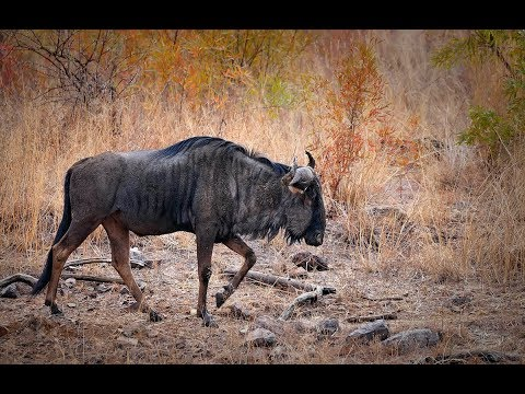 African Wildlife Photo Safari- 4          _(vid-# 93 _720p)