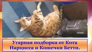 Приколы с котэйками ДО СЛЁЗ 2019 Смешной Кот Видео с кошкой..