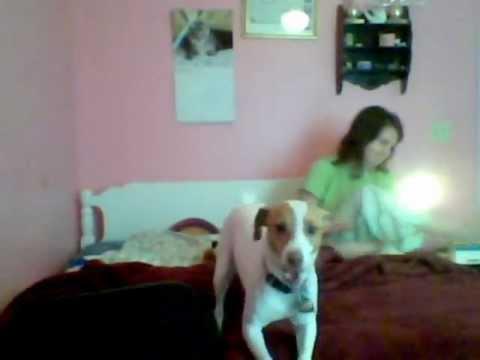 Girl and dog webcam
