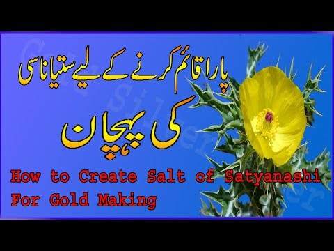 How to create Salt of Satyanashi for Gold making || Recovery of Salt from Plants