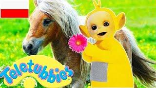 ☆ Teletubisie Po Polsku ☆ 73 DOBRA JAKOŚĆ (Pełny odcinek) ☆ Bajki dla dzieci | Jazda konna