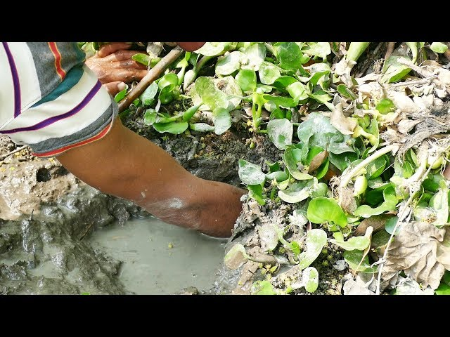 Primitive Hand Fishing। Catching Catfish by Hand in Mud Water