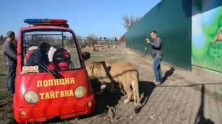 """Выпускаем Филю на свободу ! """"Я большой ,сильный и страшно красивый лев !"""""""