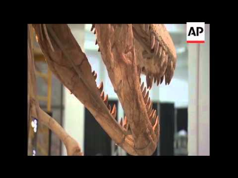 A skeleton of a Tyrannosaurus bataar, a distant cousin to the infamous T-rex, is going to be auction