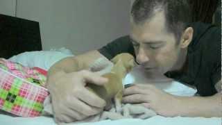 Mylee - 5 Week Chihuahua Puppy